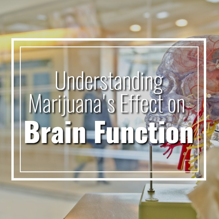 Understanding Marijuana's Effect on Brain Function