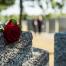 Cemetery - Overdose